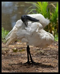identifying birds
