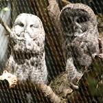 Woodland Park Zoo Seattle 033