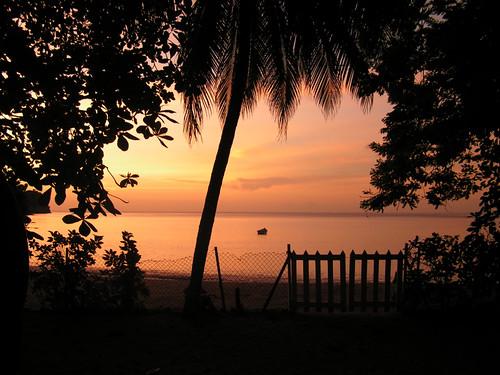 sunset tree beach island gates palm caribbean tobago charlotteville