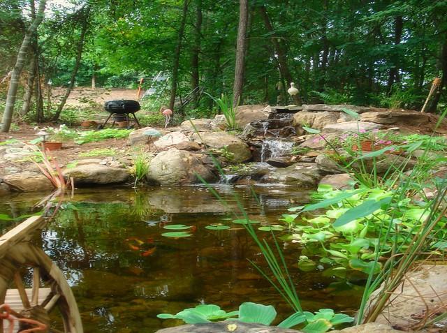 Backyard Koi Fish Pond : Backyard koi fish pond  Flickr  Photo Sharing!