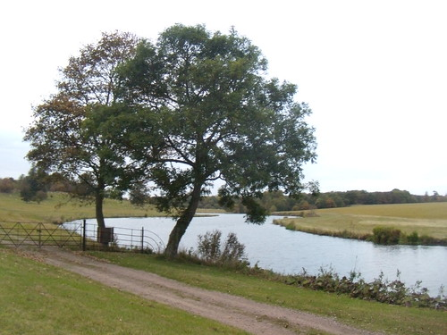 Trees by the Bleane