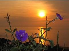 Manhã de Sol dia de Luz!!!uma maravilha de quinta feira para nós gurias!