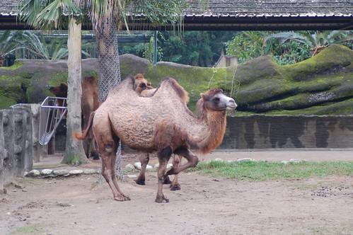 木栅动物园 - flickr 上的相片集