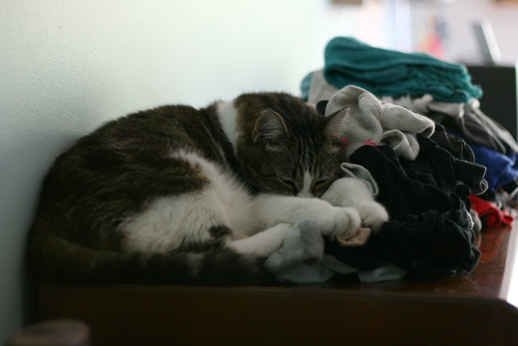 fat cat + piles of laundry = nap