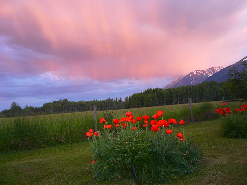 bc smithers sunsetoverpoppies