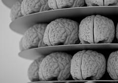 brain, organ,