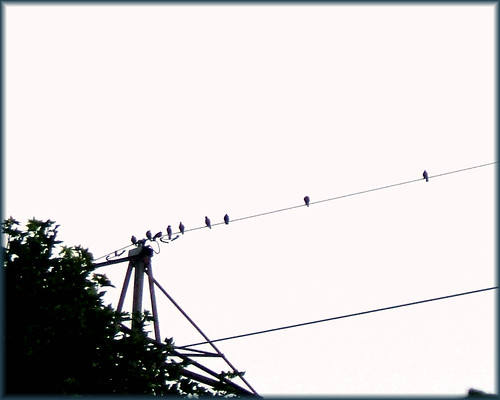 """Like a bird on the wire...."" by lizlio"