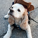 Cowboy Dog by -Dons