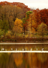 Autumns Colours on Cootes,09