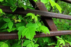 Leaves and Rails
