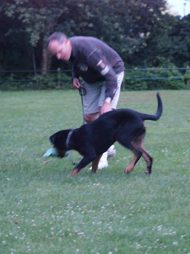 Learn How To Train Your Dog Properly By Following These Tips 2