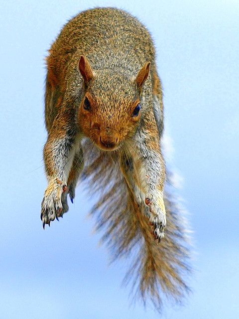Incoming Squirrel!