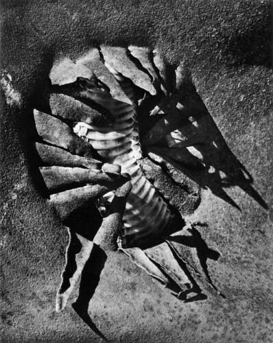 wynn_bullock_rattlesnake_in_tin_can_1972 by John Armstrong aka John Legweak