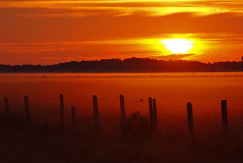 sky birds clouds sunrise fence landscapes florida country hendrycounty dinnerislandwma michaelskelton michaeldskelton michaeldskeltonphotography