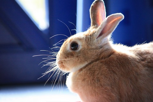 Rabbit with Backlight