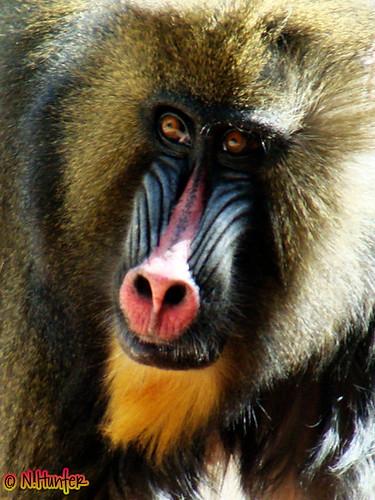 Pithecia | Planet of the Monkeys