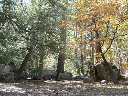 Cedar Creek Camp