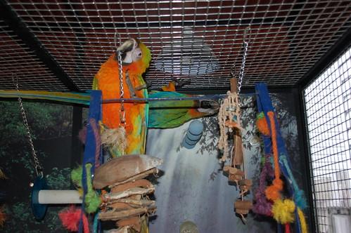 Safe Metals For Parrots