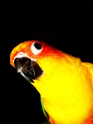 4156495780 7f281fa91f Funny bird!