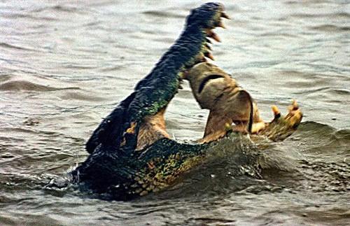 鳄鱼吃鲨鱼 | flickr –