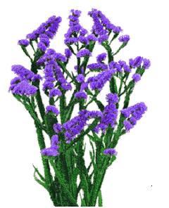 photoStatice Flower