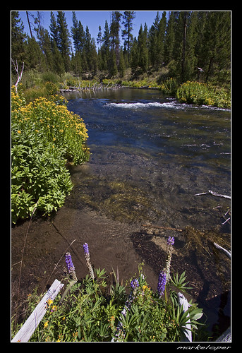 flowers fall water oregon canon river stream 50d markeloper