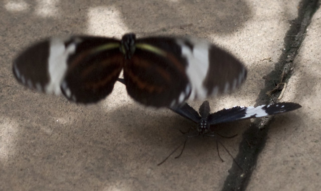 Butterfly at brookside gardens flickr photo sharing - Butterflies Mating Flickr Photo Sharing