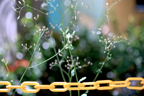 Chains and life