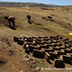 Bricks and Cows - Ucchus, Peru