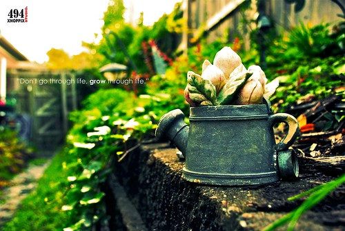 life green fall nikon backalley dof tn bokeh memphis grow growth nikkor d80 18135mm studio494