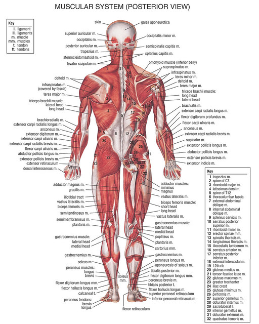 Pinpoint Back Pain Diagram - House Wiring Diagram Symbols •