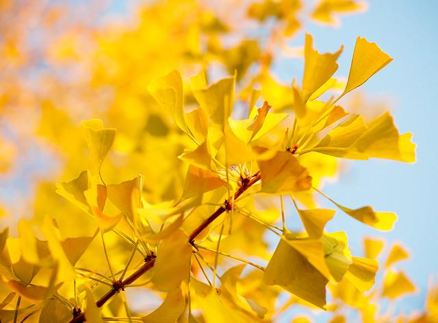yellow things   Flickr - Photo Sharing!