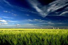 fields with blue skies