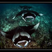 Mantas in the Maldives by Julian Cohen