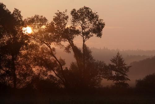 morning mist tree silhouette germany landscape thüringen weide village thuringia sonne sonnenstrahlen willowtree weidenbaum schackendorf