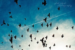 Free as a bird, like the next best thing to be. Free as a bird.