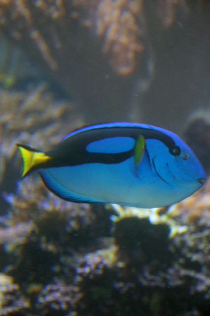 Neon Blue Fish | Flickr - Photo Sharing!