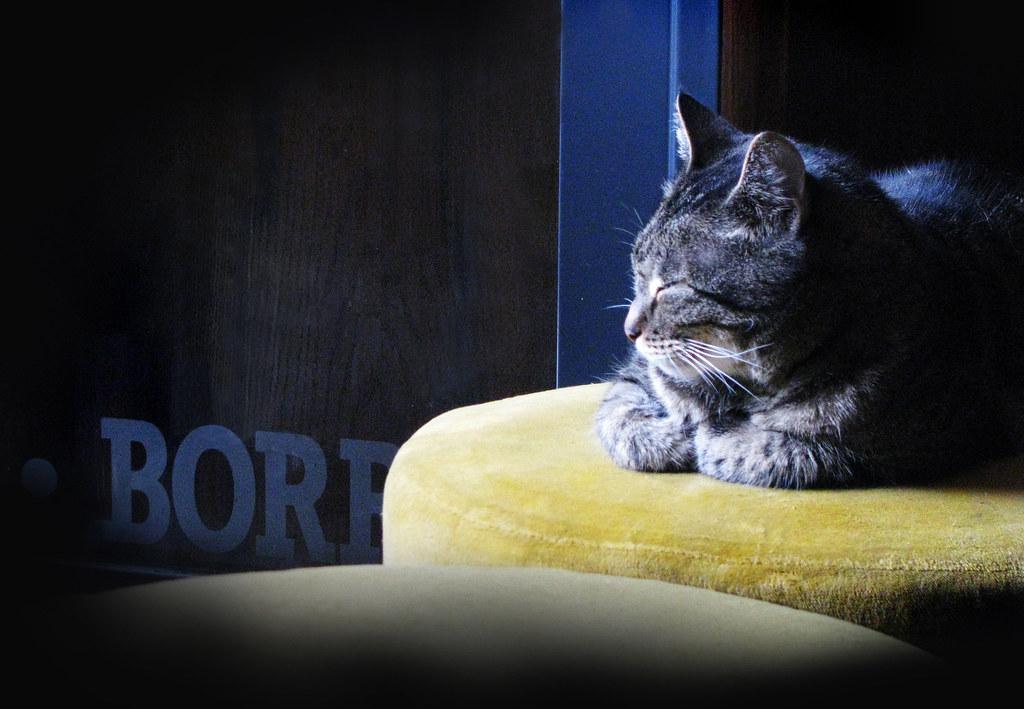 Pub cat_utrecht