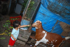 Marziya And Jimba Her Favorite Goat by firoze shakir photographerno1