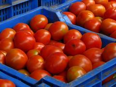 India - Koyambedu Market - Tomatoes 02