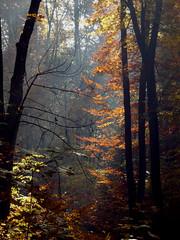 Waldstimmung am Morgen