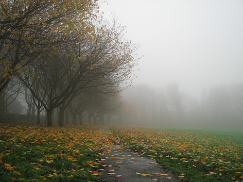 Path, trees, mist, Worral November 09
