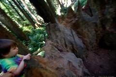 walking in the humboldt redwoods    MG 1179