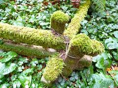 rainforest, leaf, plant, flora, green, produce, vegetation, moss,