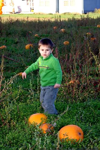"""no thanks, i don't want a pumpkin""    MG 6737"