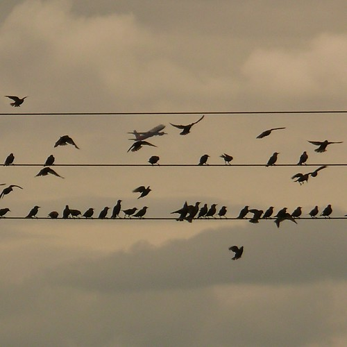 Boeing + Birds by Frizztext