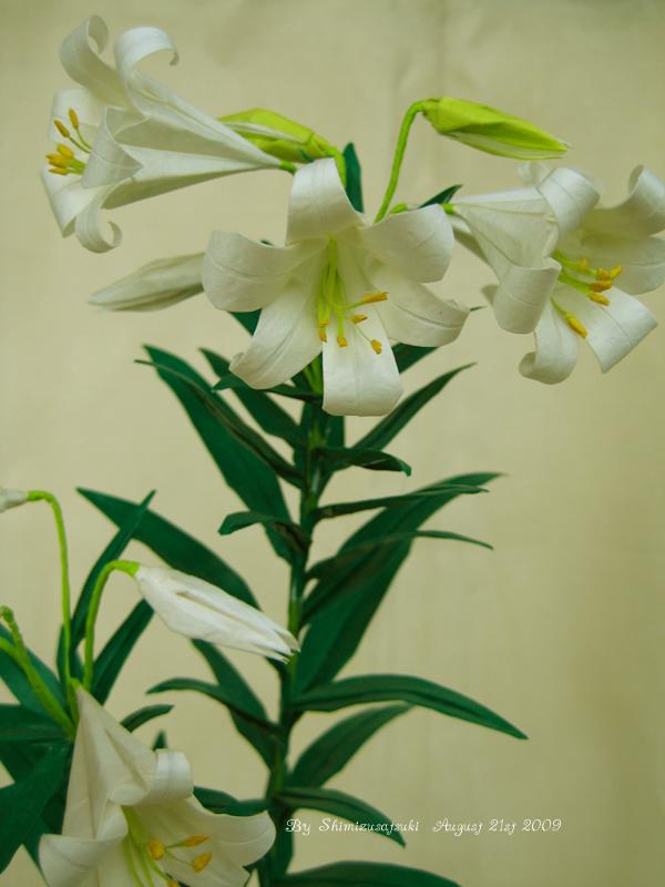 Origami Easter Lily Lilium Longiflorum