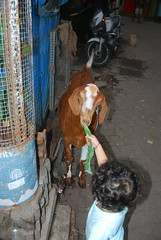 Marziya Feeding Jimba the Goat by firoze shakir photographerno1