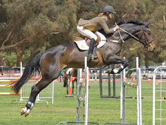 animal training(0.0), physical exercise(0.0), animal sports(1.0), equestrianism(1.0), english riding(1.0), modern pentathlon(1.0), eventing(1.0), mare(1.0), stallion(1.0), show jumping(1.0), hunt seat(1.0), equestrian sport(1.0), sports(1.0), recreation(1.0), outdoor recreation(1.0), equitation(1.0), horse(1.0), person(1.0),