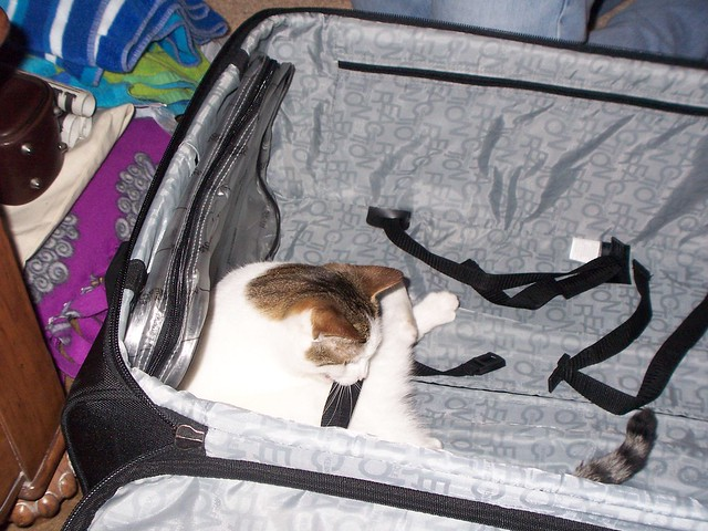 pfluff helps us pack